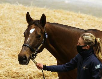 Beach Frolic lit up the Tattersalls December Mares Sale selling for 2,200,000 Guineas