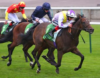Mishhar, dam of Group 2 Juddmonte Royal Lodge winner New Mandate (pictured), was purchased at the February Sale for 2,000 guineas