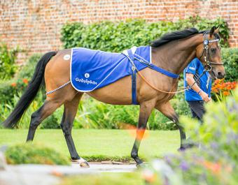 The Godolphin consignment will feature 101 lots including mares in foal to leading proven sires DARK ANGEL, DUBAWI, FRANKEL, NIGHT OF THUNDER and SIYOUNI.