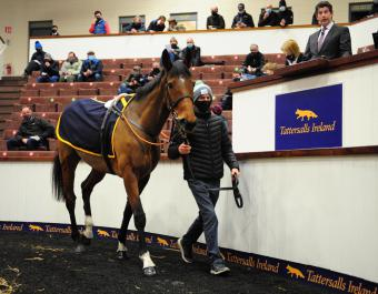 Laurina Lot 801A sells for €290,000