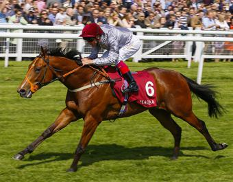 Tattersalls Craven Breeze Up graduate and record-breaking First Season Sire Mehmas