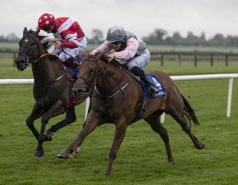 Slievebrook House Stud's three-time winner Queens Carriage has an Official Rating of 97