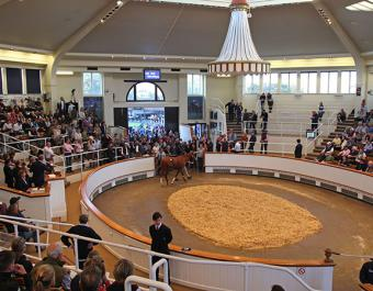 The Tattersalls sales ring saw sustained demand from start to finish at all levels of the market