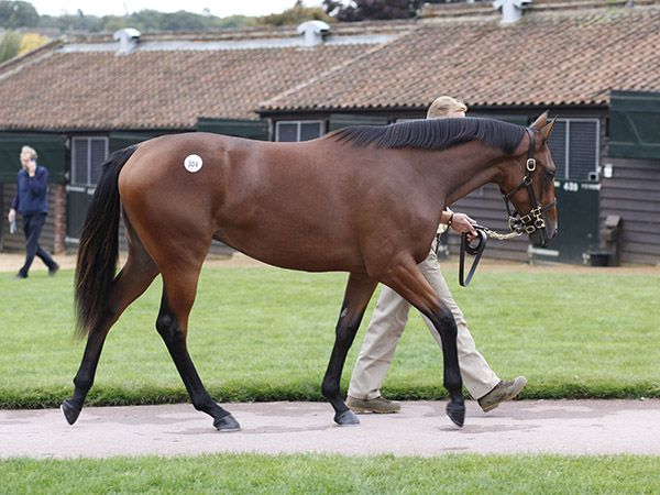 The Dubawi filly out of Loveisallyouneed. The World's most expensive yearling in 2015.