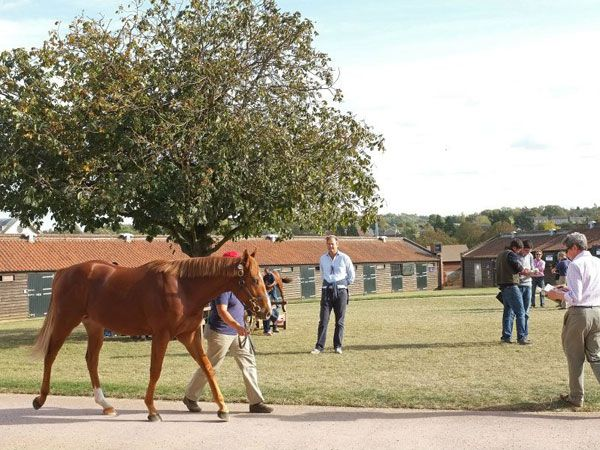 Yearling inspections at Tattersalls