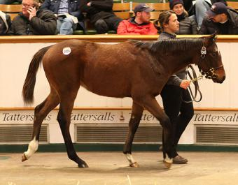 The Frankel filly foal out of SIVOLIERE who realised 360,000 Guineas at the 2019 Tattersalls December Foal Sale