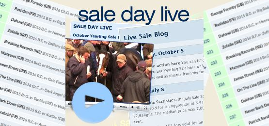 Sale Day Live