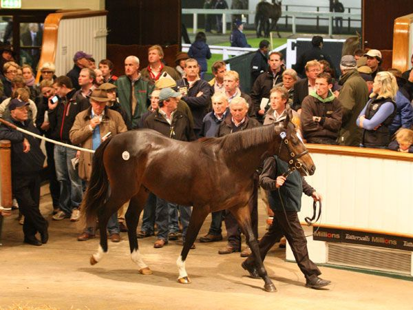 Galileo colt out of Funsie purchased for 2.5m gns in 2012.