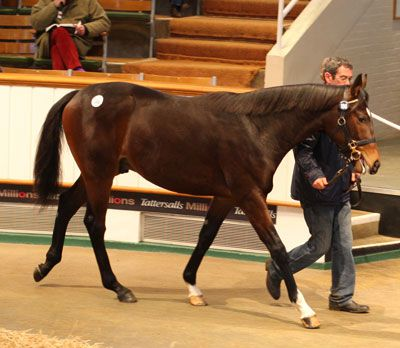 LOT 186: GALILEO - GOLDEN CORAL