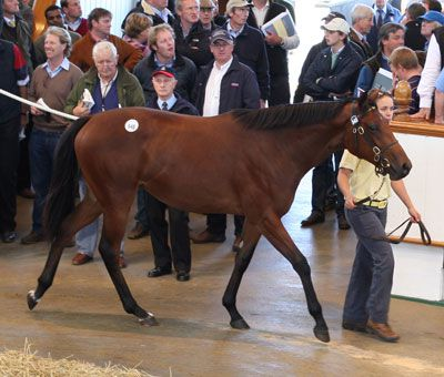 LOT 548: GALILEO - RISKAVERSE