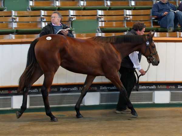 Lot 1491: Acclamation (GB) / Miss Chaussini (IRE)
