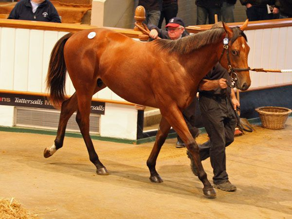 Lot 695: Acclamation (GB) / Grand Slam Maria (FR)