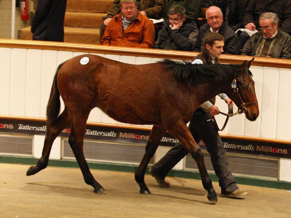 Lot 939: Sea The Stars (IRE) / Ripples Maid (GB)