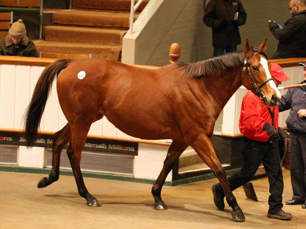 Lot 2011: Rainbow Springs (GB)
