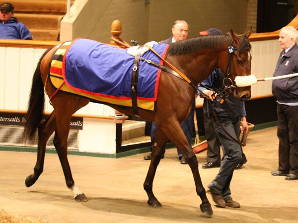 Lot 56: Shamardal (USA) / Oregon Trail (USA)