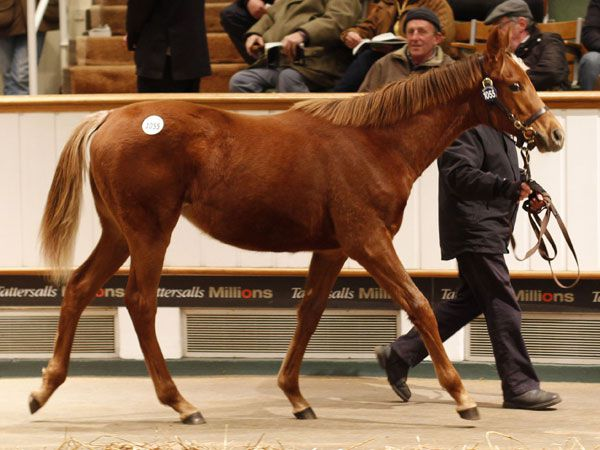 Lot 1055: Dubawi (IRE) / High Heeled (IRE)