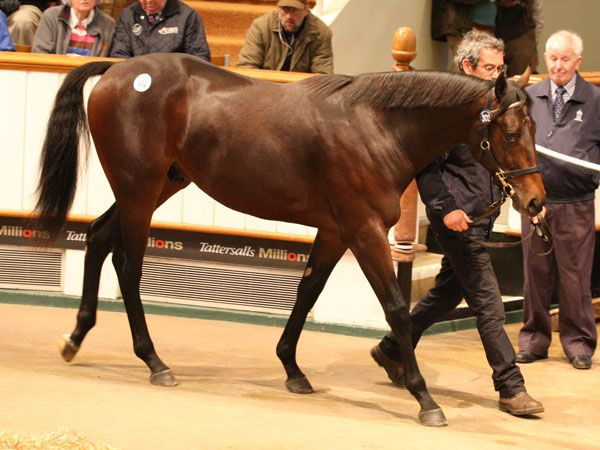 Lot 302: Oasis Dream (GB) / Briolette (IRE)