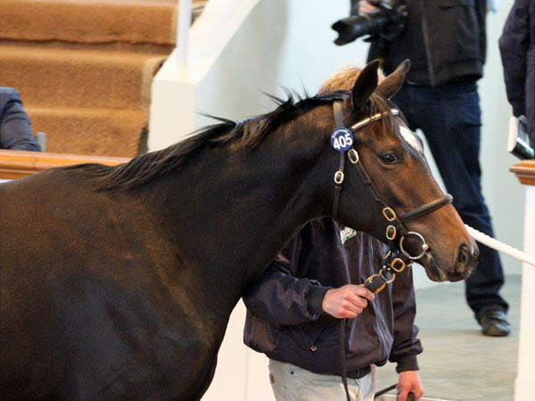 Lot 405: Galileo (IRE) / Frappe (IRE)
