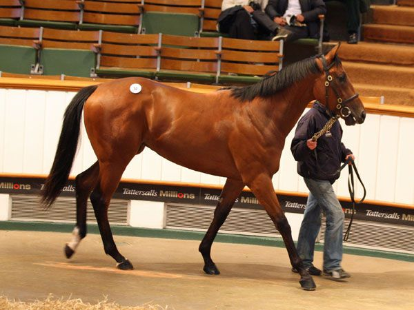 Lot 50: Invincible Spirit (IRE) / Quad's Melody (IRE)