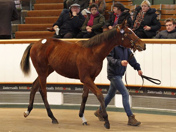 Lot 961: Oasis Dream (GB) / Termagant (IRE)