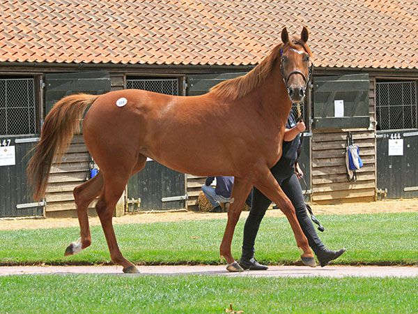 Lot 108: Totally Millie (GB)