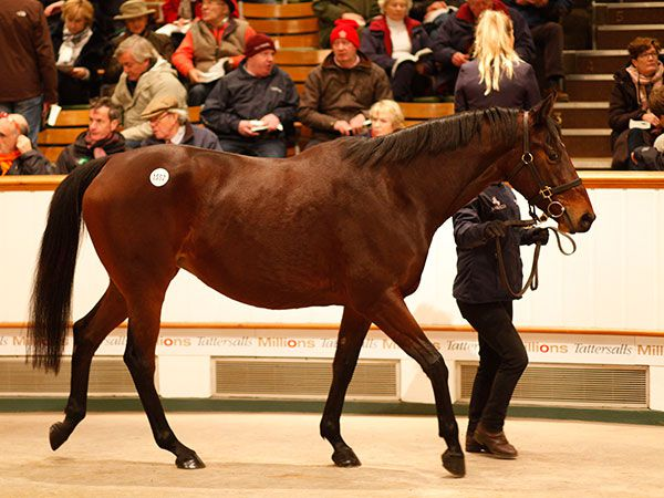 Lot 1552: Pure Excellence (GB)