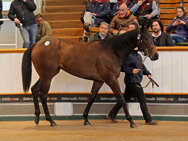 Lot 181: Invincible Spirit (IRE) / Golden Flyer (FR)