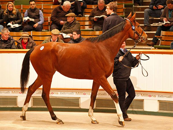 Lot 1874: Long View (IRE)