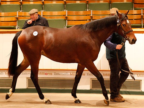 Lot 197: Sea The Stars (IRE) / Meetyouthere (IRE)