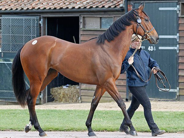Lot 233: War Front (USA) / Pastel Gal (USA)