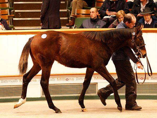 Lot 463: Showcasing (GB) / Largo (IRE)