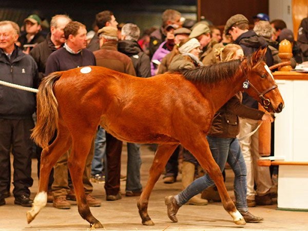 Lot 754: Lope de Vega (IRE) / Purple Tigress (GB)