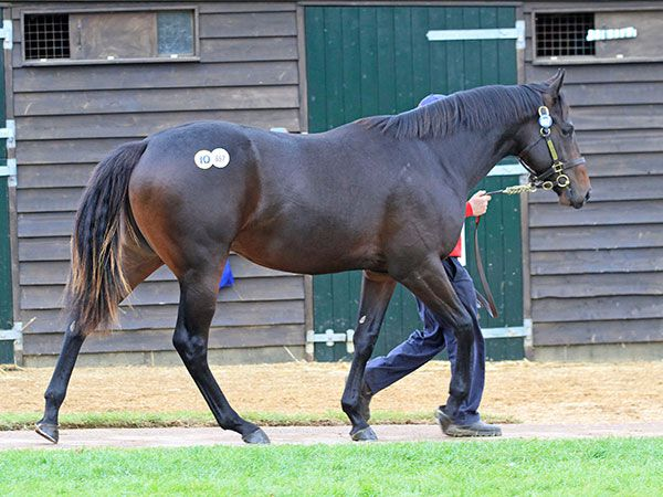 Lot 867: Kyllachy (GB) / Constitute (USA)