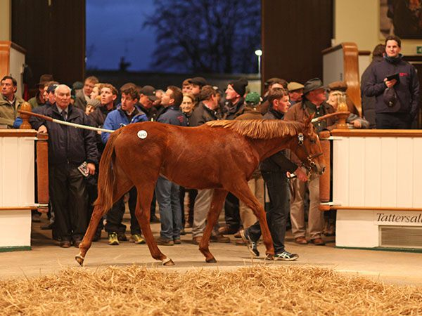 Lot 1162: Dubawi (IRE) / Hit The Sky (IRE)