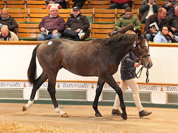 Lot 1659: Dark Angel (IRE) / Nashira (GB)