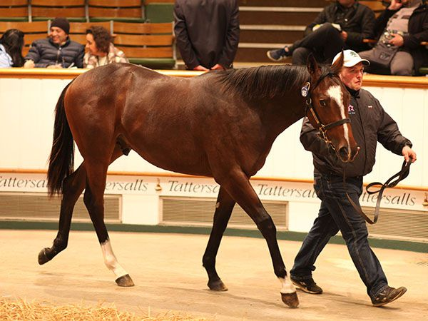 Lot 1675: Sir Percy (GB) / Pilcomayo (IRE)