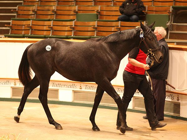 Lot 1766: Showcasing (GB) / Tremelo Pointe (IRE)