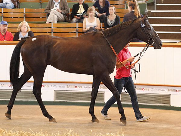 Lot 358: Go Sakhee (GB)
