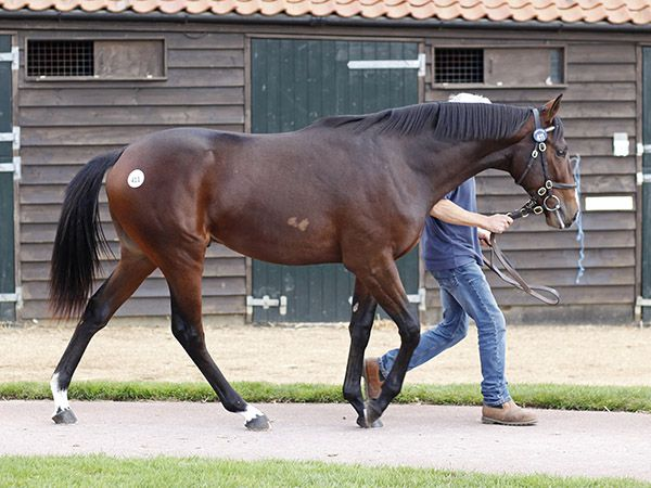 Lot 411: War Front (USA) / River Belle (GB)
