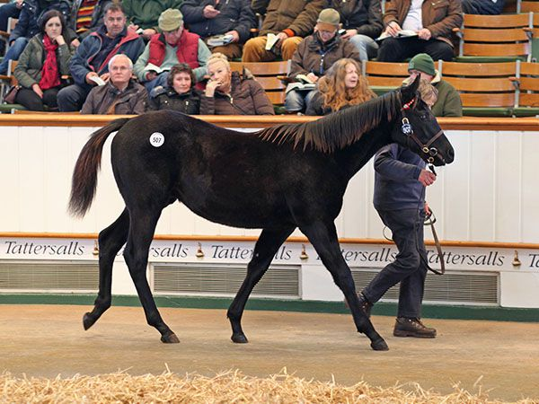 Lot 507: Lethal Force (IRE) / Ha'penny Beacon (GB)