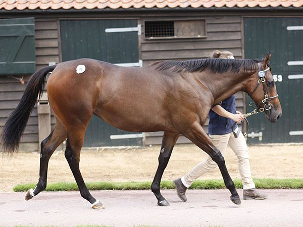 Lot 71: Dubawi (IRE) / Badee'a (IRE)