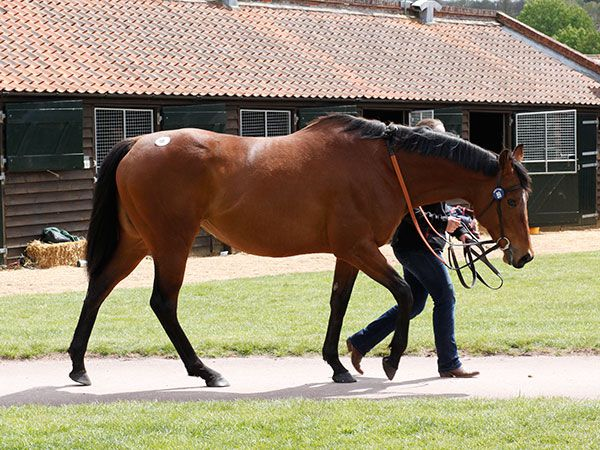 Lot 89: Neamour (GB)