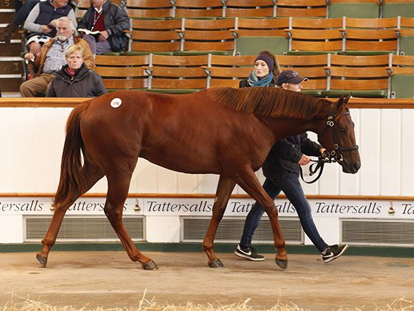 Lot 894: Zebedee (GB) / Hawattef (IRE)