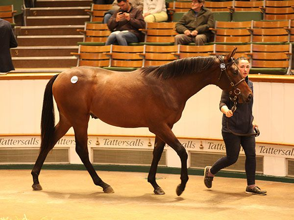 Lot 1024: Sea The Stars (IRE) / Scarlet And Gold (IRE)