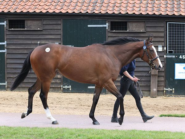 Lot 144: Acclamation (GB) / Malaspina (IRE)