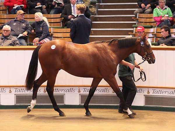 Lot 1514: Sir Percy (GB) / Three Sugars (AUS)