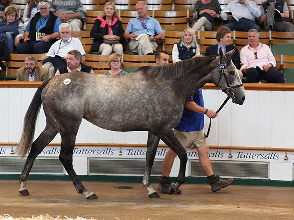 Lot 159: Desert Snow (GB)