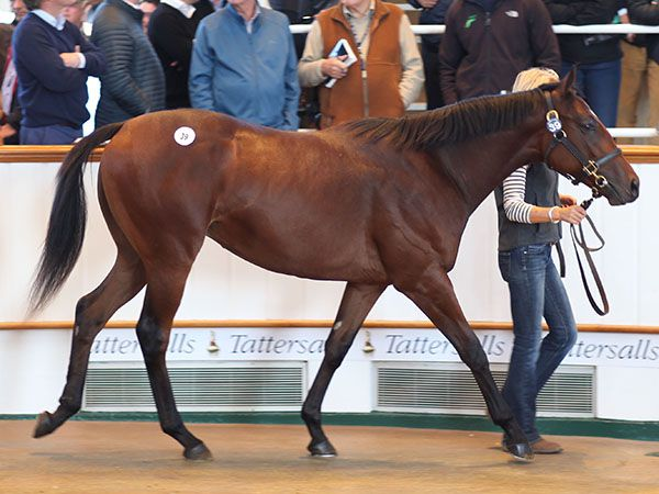 Lot 39: Dubawi (IRE) / Fallen For You (GB)