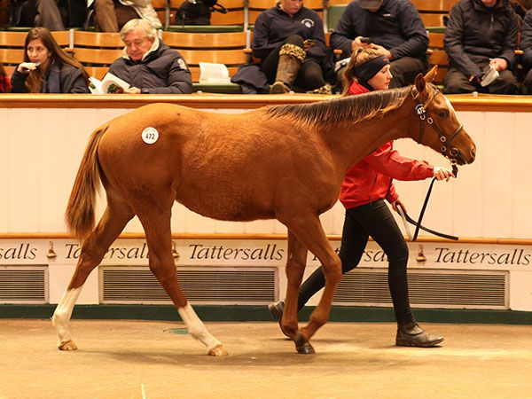 Lot 472: Kyllachy (GB) / Amicable Terms (GB)