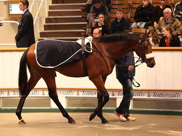 Lot 55: Invincible Spirit (IRE) / Mambo Light (USA)